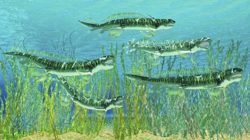 An artist's conception of what the eel-like Orthacanthus looked like. Corey Ford/Stocktrek Images/Getty Images