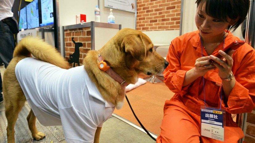 Tecnología usable para mascotas: una forma completamente nueva de llamar a su perro
