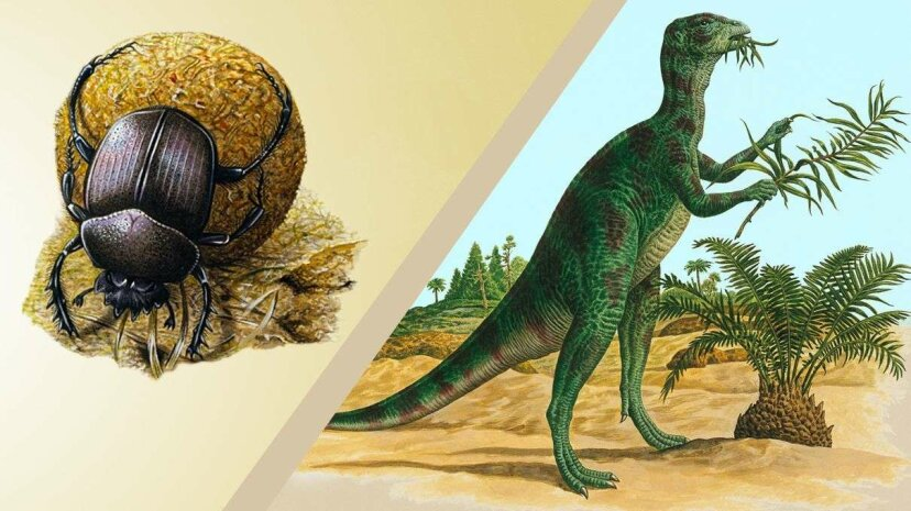 The proliferation of flowering plants made herbivorous dinosaur dropping more nutritious, which provided a backdrop fot the dung beetle's evolution, a new study suggests. De Agostini Picture Library/De Agostini/Getty Images