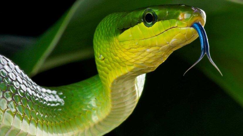 Cuevas de serpientes colgantes