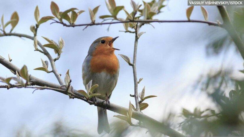 印象的な鳥のハッスル