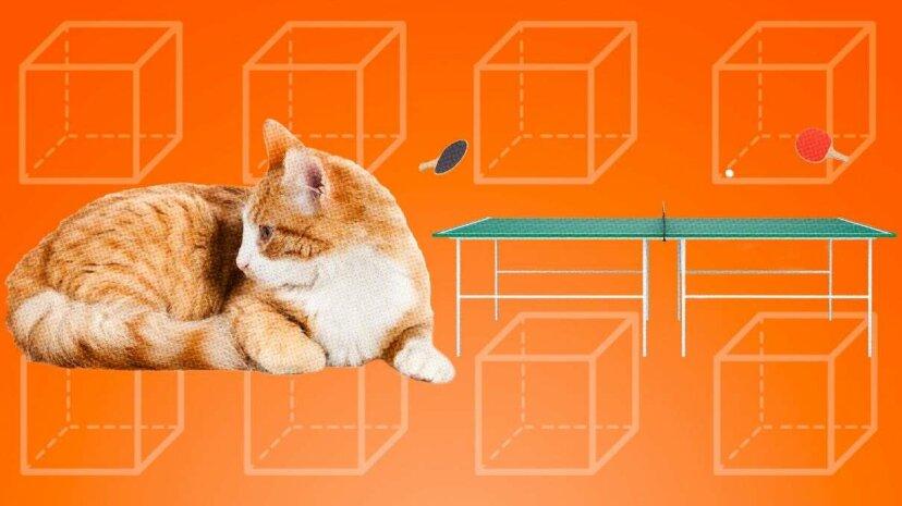 猫は卓球台のようですか?