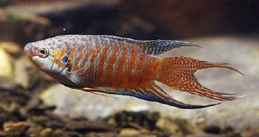 淡水水族館の魚