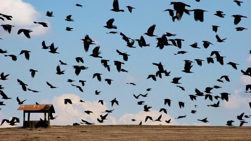 すべての鳥が冬に南に飛ぶわけではありません:部分的な渡りが増加しています