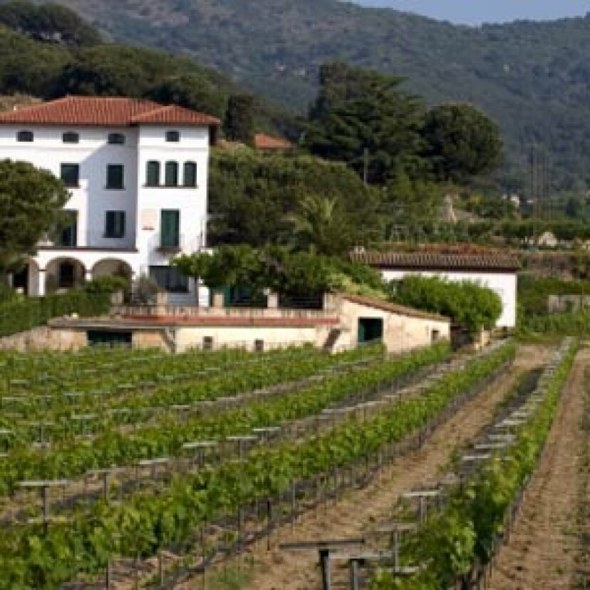 ペネデスワイン地域への究極のガイド