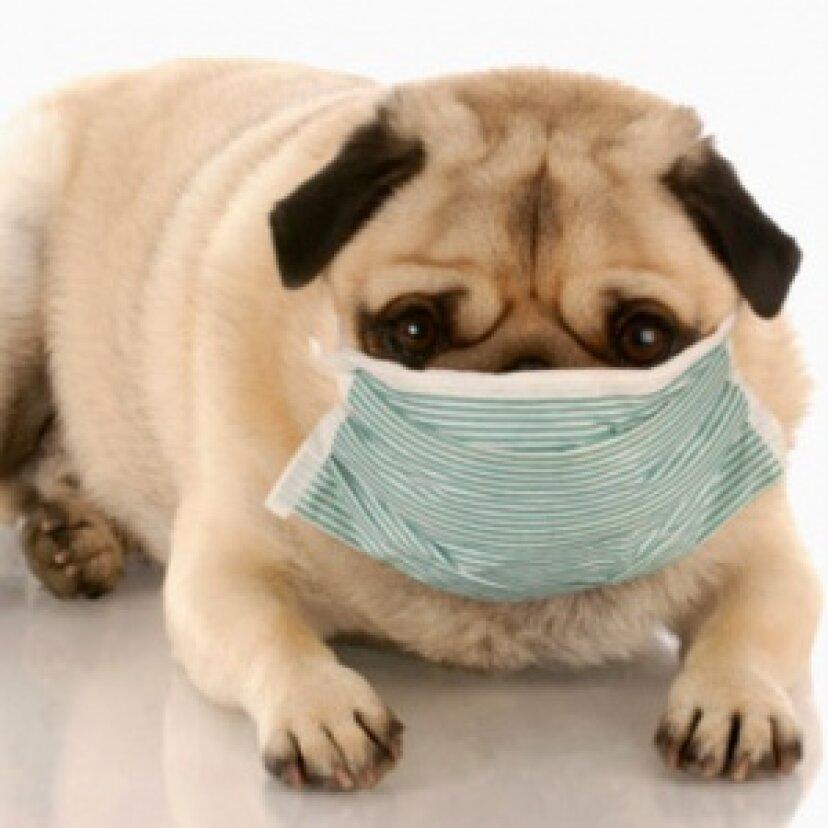 ペットアレルギーについての神話と誤解