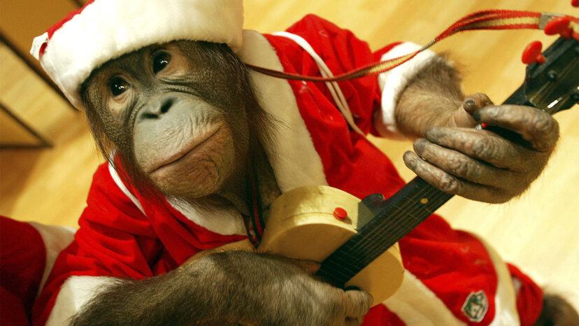 6 Gründe, warum Affen niemals Haustiere sein sollten