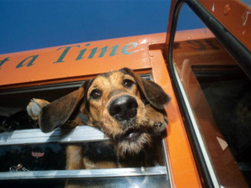 ペットを公共交通機関に乗せることはできますか?