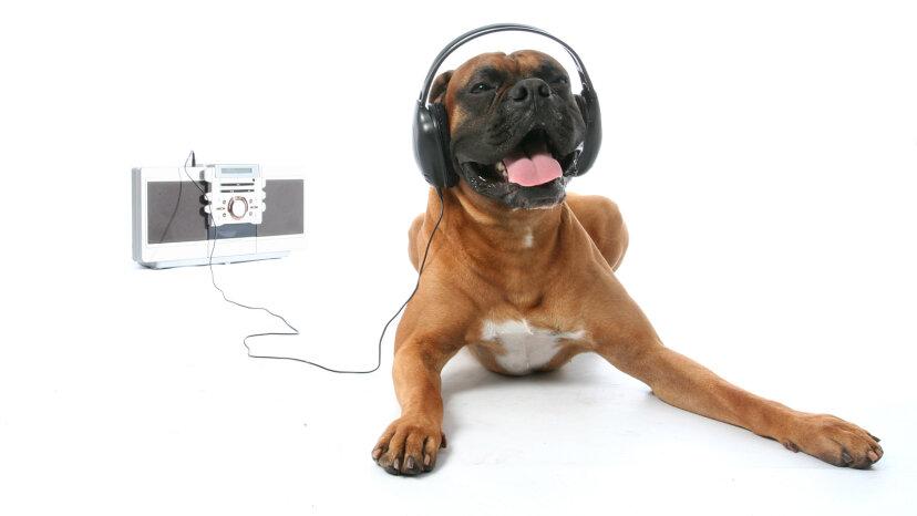 Spotifyのプレイリストは犬...と猫...とハムスターに行きました