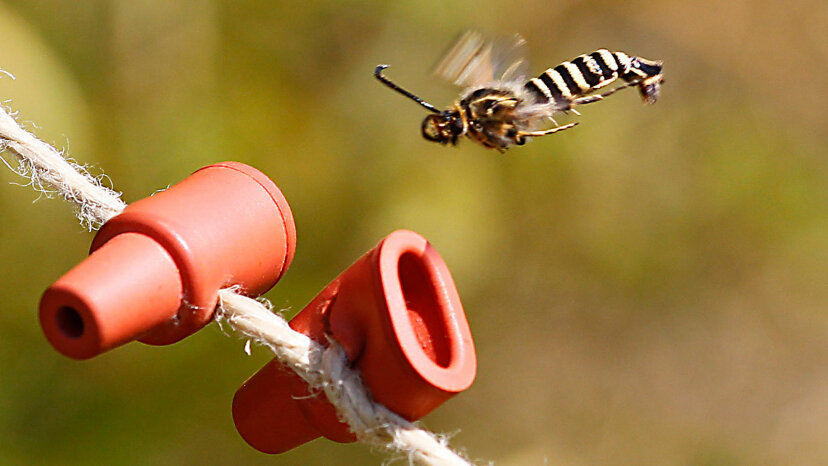 fly pheromone trap