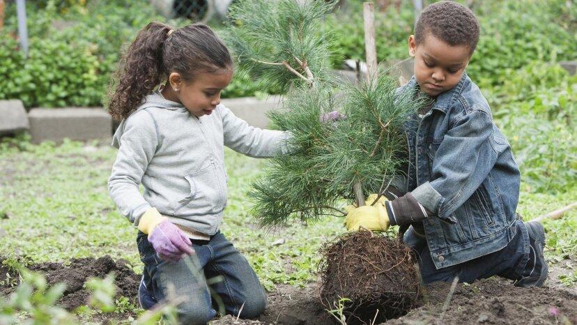 松の木を植える方法