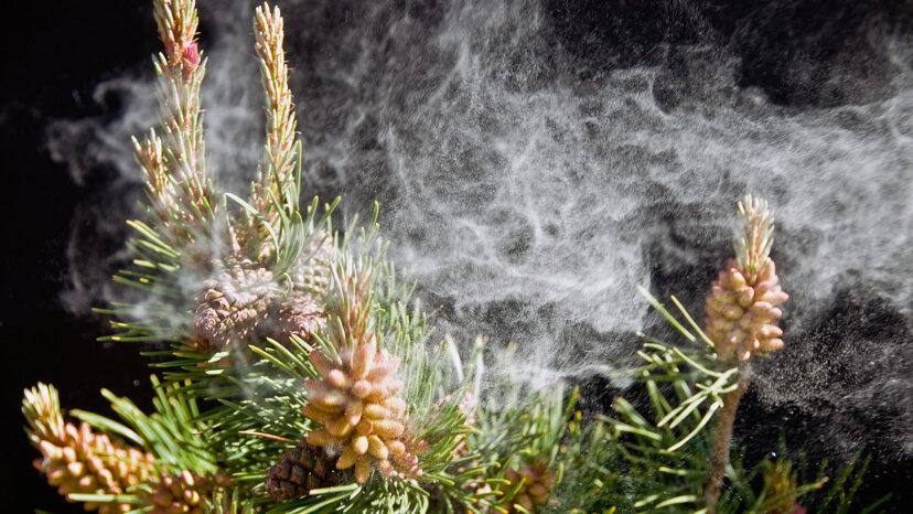 La ciencia detrás del recuento de polen