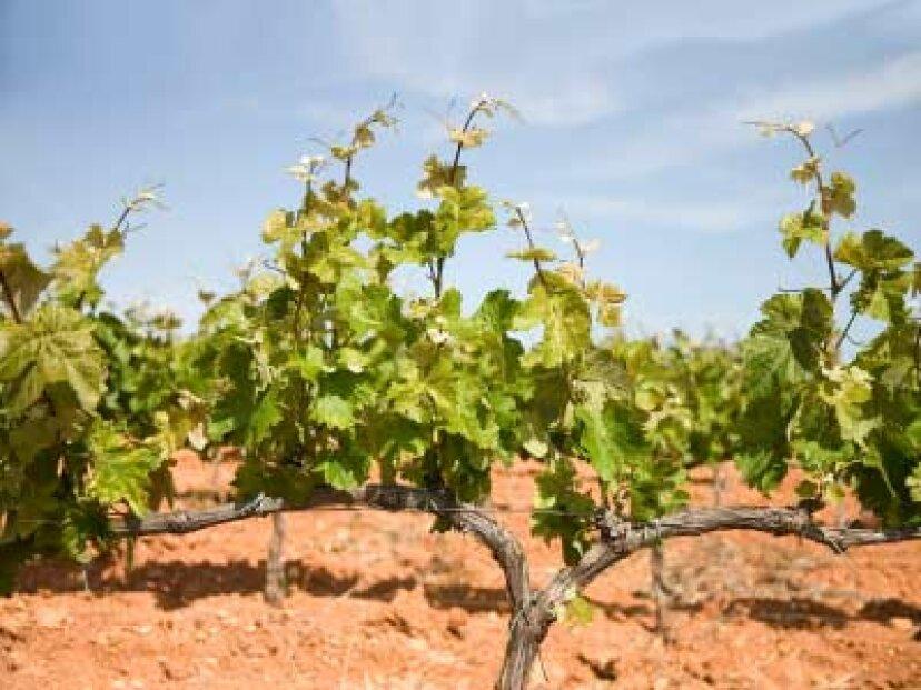 プリオラートワイン産地への究極のガイド