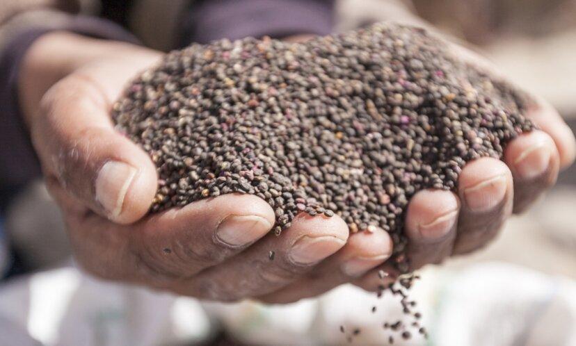 古代の穀物とは何ですか?