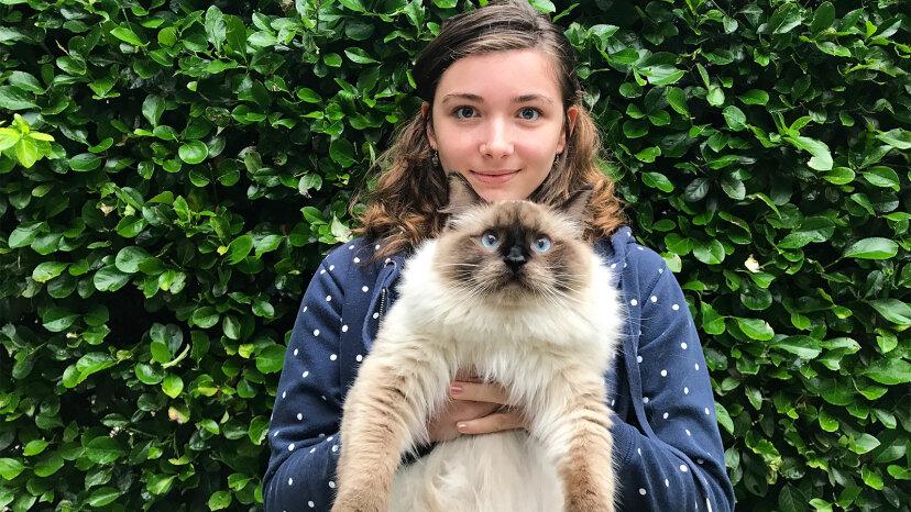 ラグドール猫は周りで最もフワフワした、最もフレンドリーな猫です