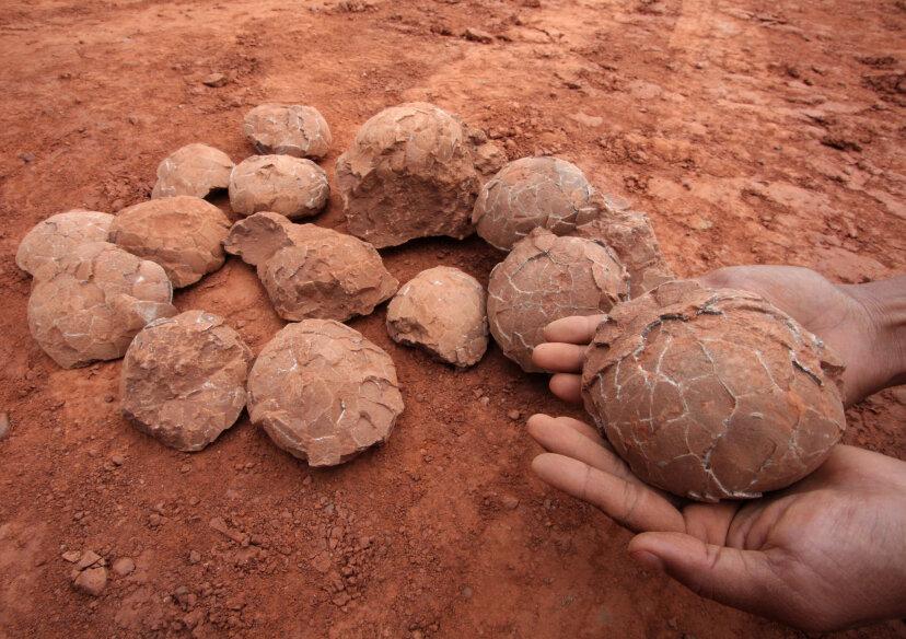 化石胚から恐竜を復活させることはできますか?