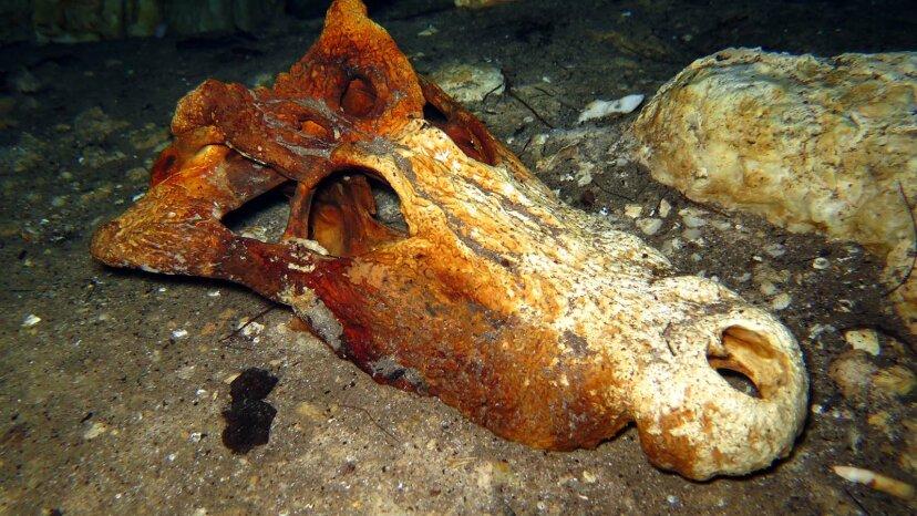 川底の骨:水中化石狩りの奇妙な世界