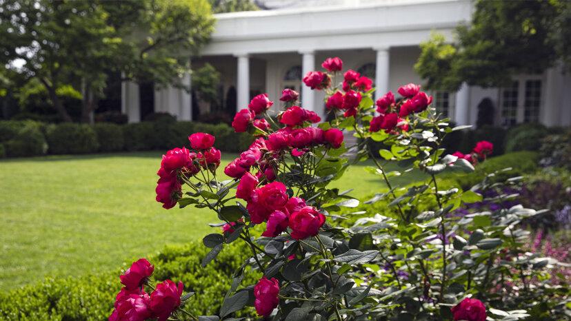 Cómo el jardín de rosas de la Casa Blanca se convirtió en el jardín más famoso del mundo