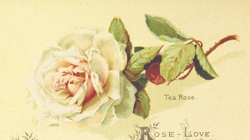 ¿Rosas rojas o amarillas? Cada flor tiene un significado secreto