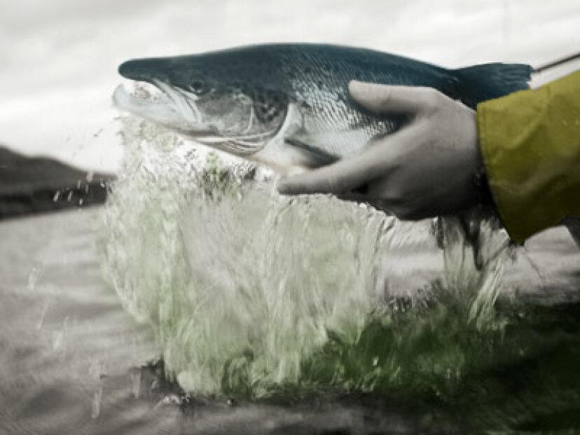 鮭釣り技術入門