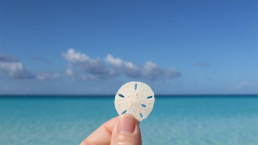 ¿Está bien sacar dólares de arena de la playa?