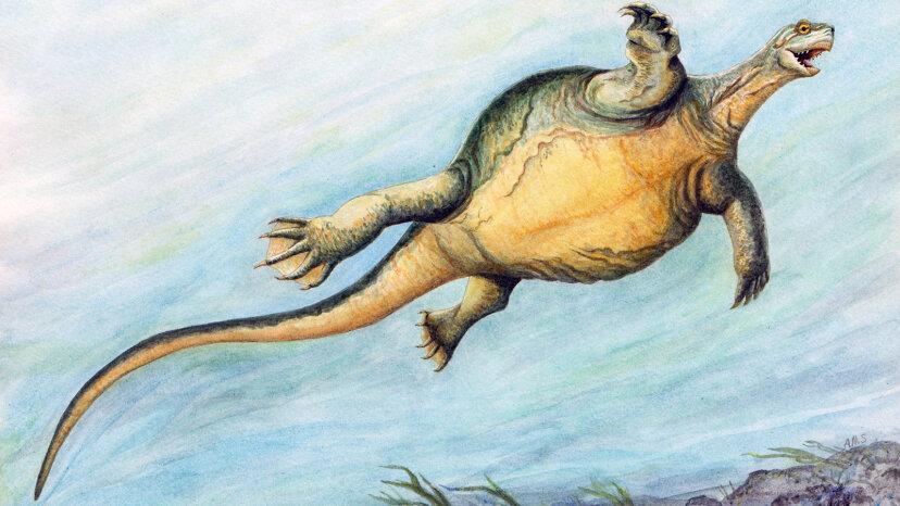 Prähistorische Schildkröte hatte einen zahnlosen Schnabel, aber keine Muschel