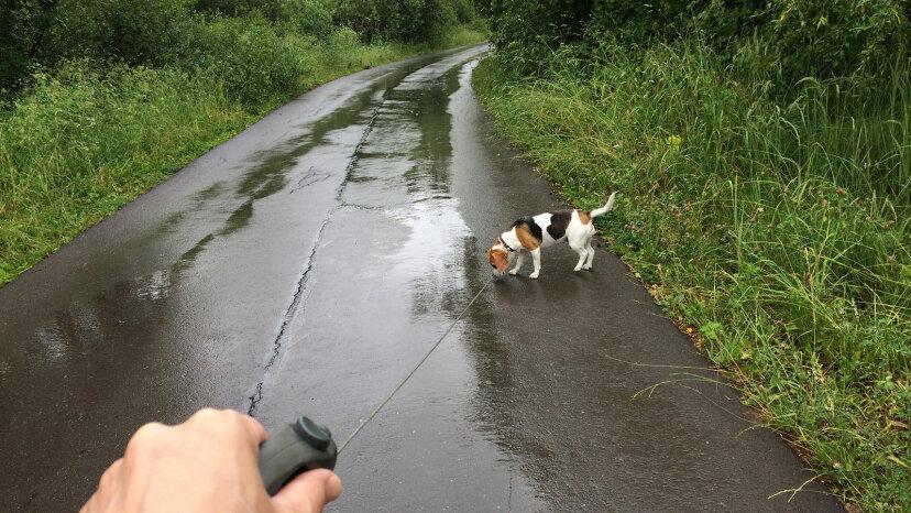 dog on wet road