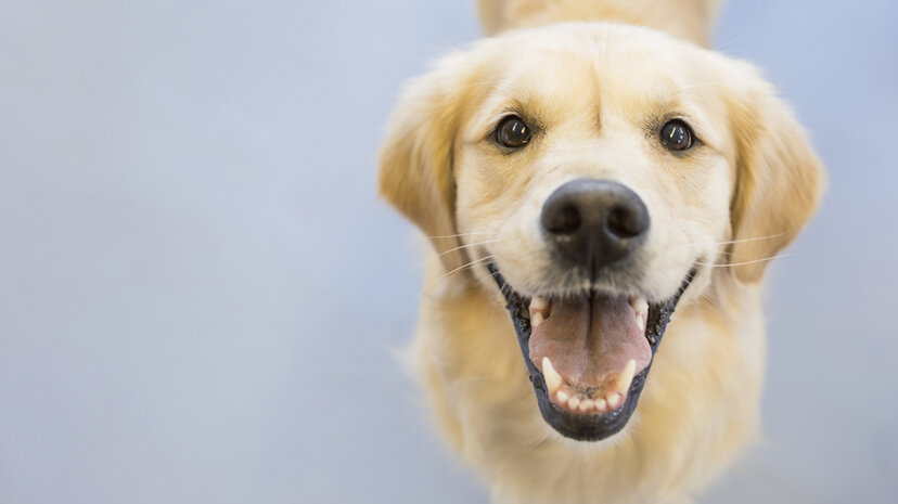 Who's a good boy? Who wants a treat? Who randomly gets called Fido ... and why? Hero Images/Getty Images