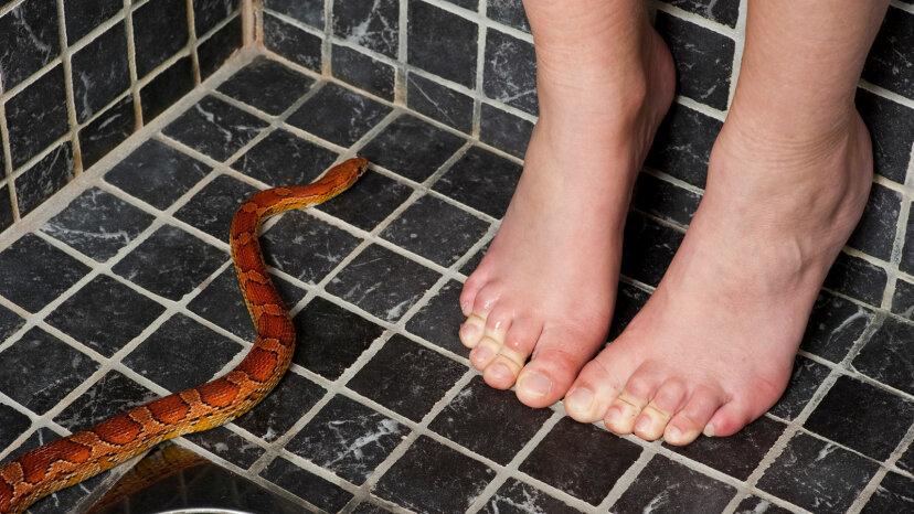 ヘビは本当にトイレのパイプを上ることができますか?