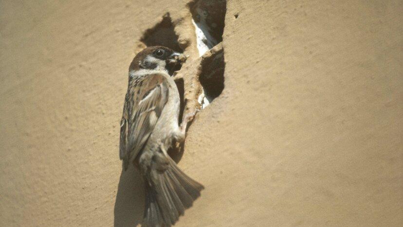 アーバンバードはお尻で虫を追い出します