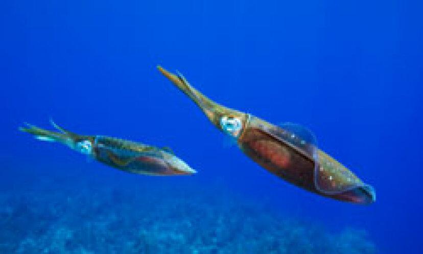 イカの写真