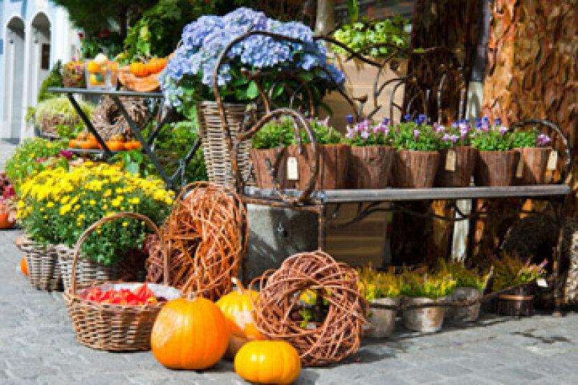 夏に庭を始められますか?