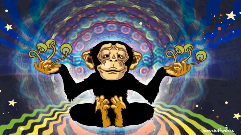 Stoned ape hypothesis
