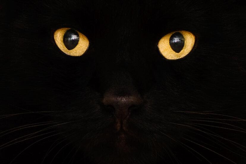 ¿Por qué la gente es tan supersticiosa con los gatos?