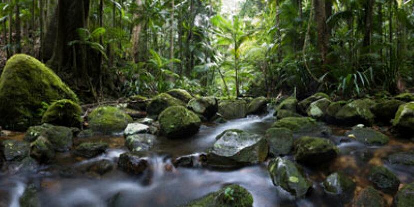 ジャングルで最も重要なサバイバルツールは何ですか?