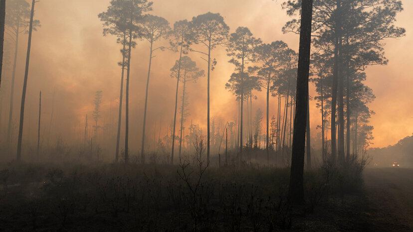 Sümpfe und Waldbrände: Eine gefährliche Kombination