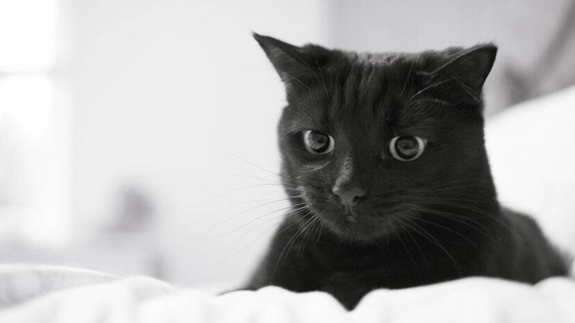 ニコラテスラの猫と他の猫の魅力