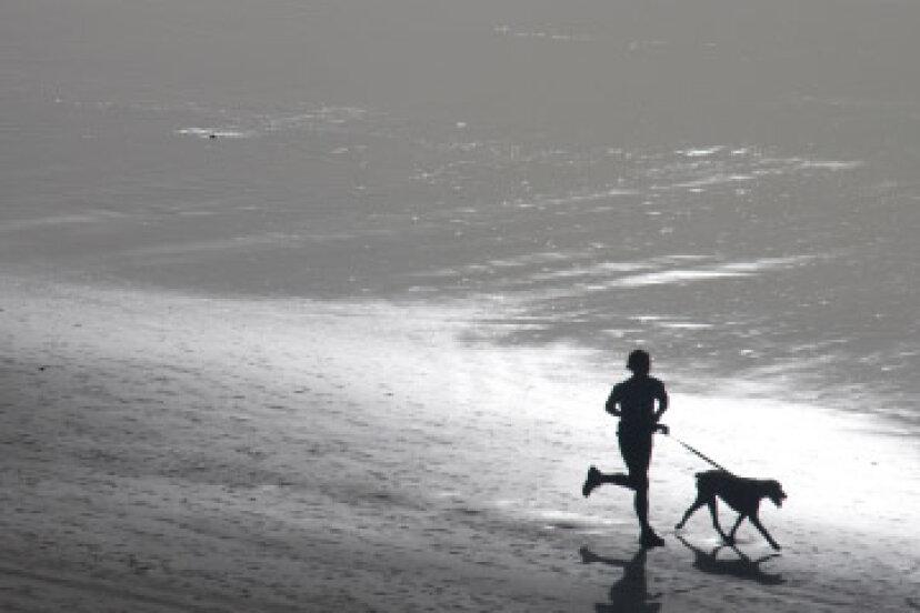 あなたの犬と一緒に走るためのトップ10のヒント