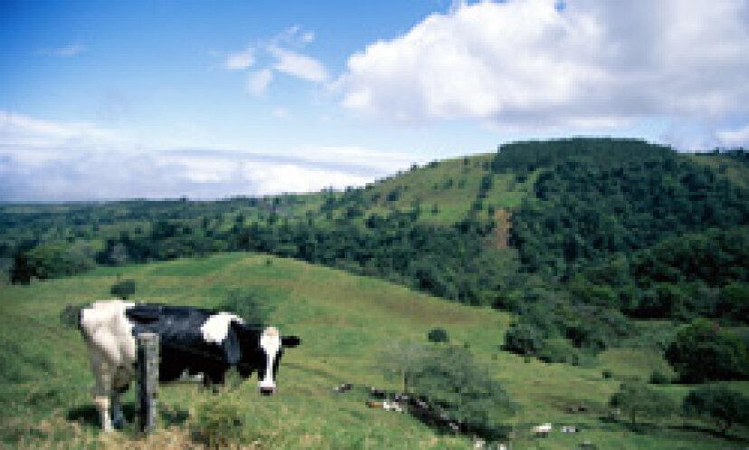牛を搾乳する方法