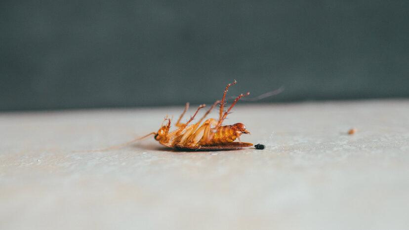 あなたのタウンホームから害虫を遠ざけるための5つの方法