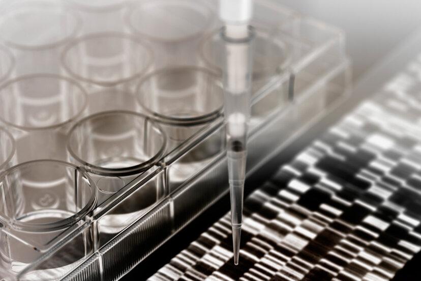 DNAを移植できるでしょうか?