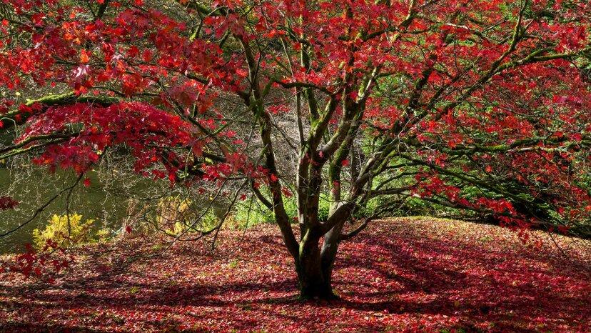 Pi puede ayudarlo a determinar la edad de sus árboles