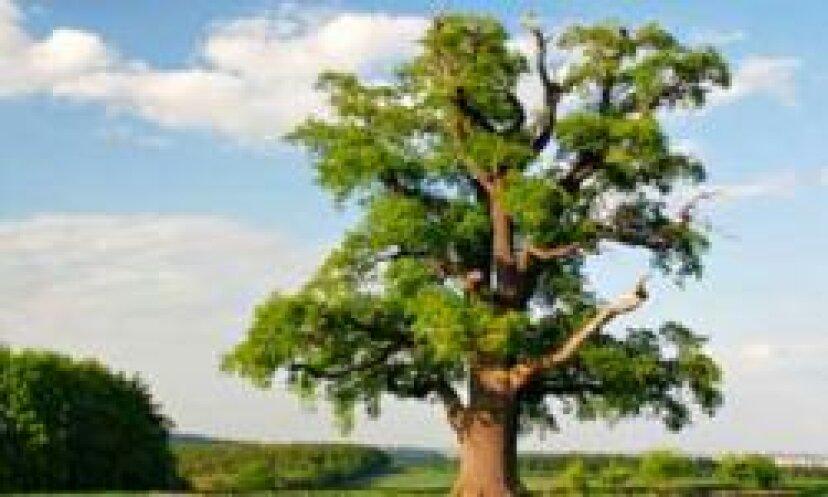 樹木アレルギーの季節はいつ?