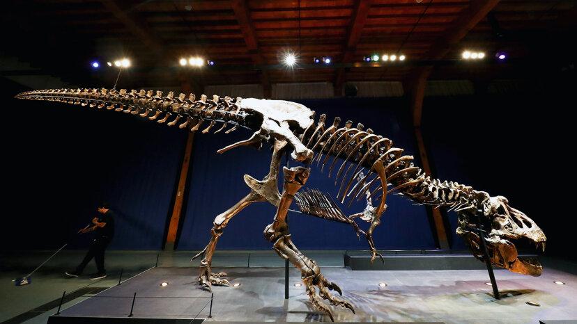 なぜティラノサウルスはそのような小さな腕を持っていたのですか?
