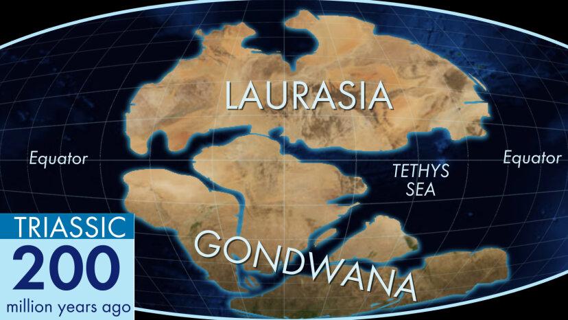 古代の土地の塊ゴンドワナが今日の大陸になった経緯