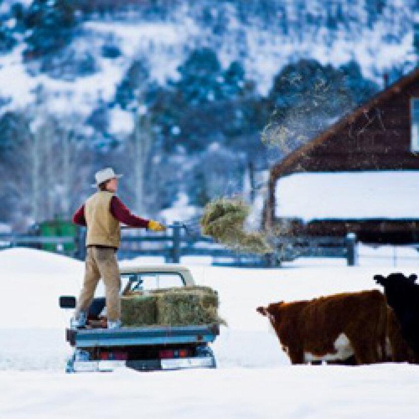 典型的な牧場のトップ5トラックキラー