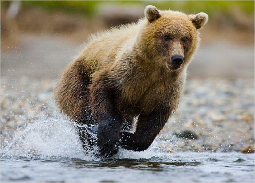 クマの種類