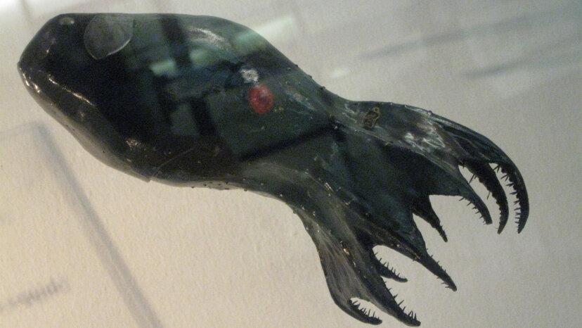 Vampir-Tintenfisch saugt eigentlich kein Blut