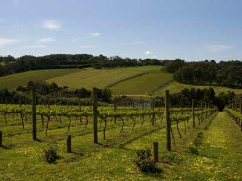 ビクトリア州のワイン産地への究極のガイド