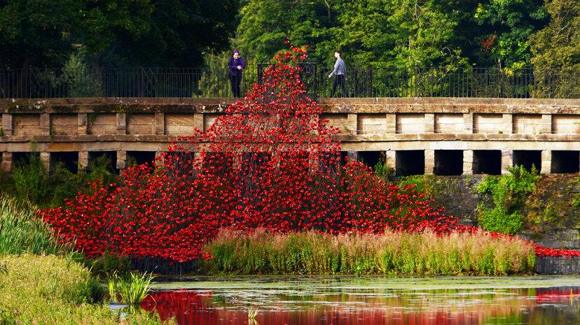 poppy sculpture Yorkshire Sculpture Park